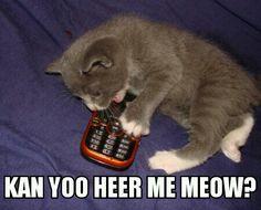 Kan yoo heer me meow? Funny Cats, Funny Animals, Cute Animals, Kittens Cutest, Cats And Kittens, Animal Captions, Like A Cat, Here Kitty Kitty, Bad Kitty