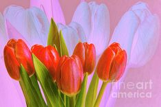 Double exposure and digital editing.Fine Art America watermark will not appear on purchased artwork. Red Tulips, Double Exposure, Spring Flowers, Fine Art America, Instagram Images, Design Inspiration, Wall Art, Artwork, Artist