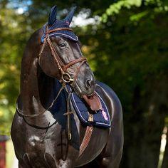 show horse