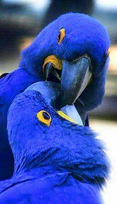 Brilliant blue.