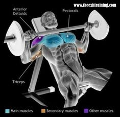 weights, personal training, muscle, dumbbells, barbells, exercise, form, technique, machines, fitness, bodybuilding, toning, fit, female, male, train, gym, workout, abs, fitness, motivation, training, drive, success, ambition, healthy, health, hot, girl, guy