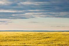 Alberta Land Brokers