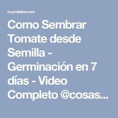 Como Sembrar Tomate desde Semilla - Germinación en 7 días - Video Completo @cosasdeljardin - YouTube