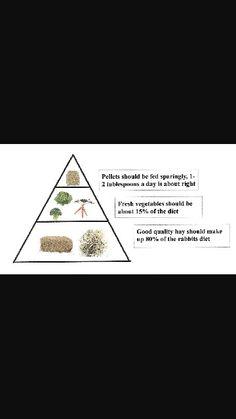 Rabbit diet guide