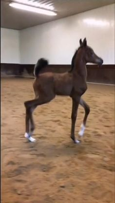 Cute Wild Animals, Baby Animals Pictures, Cute Animal Videos, Cute Little Animals, Cute Animal Pictures, Cute Funny Animals, Cute Baby Horses, Funny Horses, Funny Horse Videos