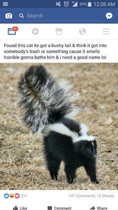 Dog Sprayed By Skunk, Skunk Spray, Skunk Removal, Getting Rid Of Skunks, Striped Skunk, Skunk Smell, Old Farmers Almanac, Animal Symbolism, Odor Remover