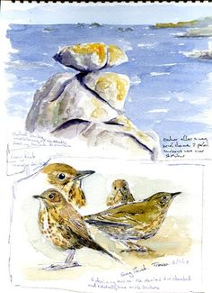Image result for wildlife sketchbook watercolor studies
