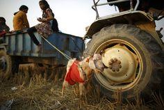 """""""O GRITO DO BICHO"""": Nepal inicia sacrifício de animais em meio a prote..."""