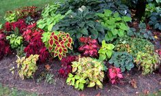 Light Shade Garden Design ideas