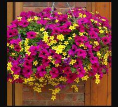 Blumenampel pink gelb