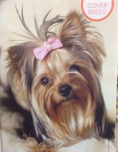 Pretty, oh how I miss my baby Fifi.  Yorkies are the best but she was also our little girl. RIP sweet angel.