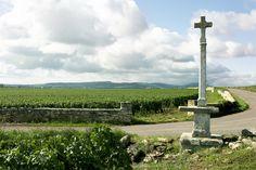 Le vignoble de Meursault