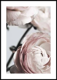 Here you will find floral prints and posters. Stylish posters with botanical prints of colorful plants. Buy botanical posters online from Desenio. Poster Photo, Gold Poster, Art Deco Bedroom, 233, Online Posters, Colorful Plants, Beautiful Posters, Art Et Illustration, Modern Art Prints