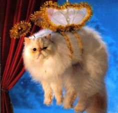 PetsLady's Pick: Funny Cat Christmas Angel Of The Day ... see more at PetsLady.com ... The FUN site for Animal Lovers