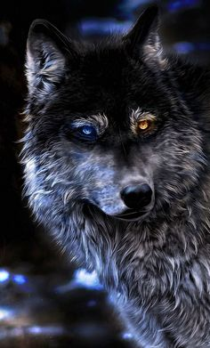 Angry Wolf Wallpapers 4K iPhone #Angry #Wolf #Wallpapers #4K #iPhone Iphone wallpaper wolf Wolf wallpaper Angry wolf