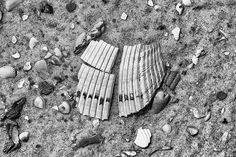 Sea Shells and Shell Fragments on a Sandy Beach Black and White Photograph (A0015855)