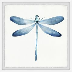 Give your wall a full and bold display with our Pastel Blue Dragonfly Framed Art Print. You'll love the watercolor tones and unique design of this piece. Dragonfly Drawing, Dragonfly Wall Art, Blue Dragonfly, Dragonfly Tattoo, Dragonfly Painting, Frames On Wall, Framed Wall Art, Framed Art Prints, Wall Décor
