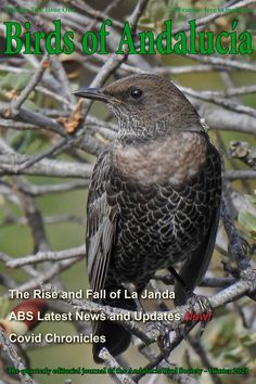 Our latest and winter magazine is out for our members. What better bird to celebrate the winter edition than a fine Ring Ouzel. Andalucia, Magazine, Bird, Winter, Nature, Winter Time, Naturaleza, Birds, Magazines