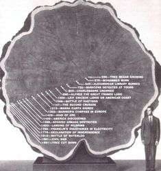 The life of the Mark Twain Tree, felled in 1891. Slices of its trunk were sent to the Museum of Natural History.