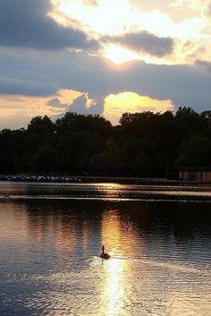 Sunset at Hyde Park, London