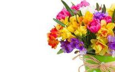 nárcisz virágcsokor és dekoráció tavaszi virág tulipán frézia