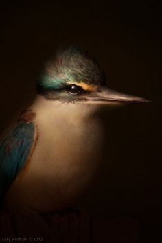 Here is a wonderful 'crepuscular' (dusky evening light) Renaissance painting effect applied to New Zealand native & endemic birds by Cally Whitham. Artistic Photography, Amazing Photography, Art Photography, Digital Photography, New Media Art, New Art, New Zealand Art, Renaissance Paintings, Beautiful Birds