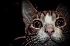 Whatcha looking at cat??