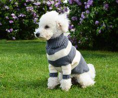 Pudel Theo im kuscheligen Pulli. Dog Sweaters, Lamb, Dog Fashion, Pet Products, Knitting, Pets, Animals, Street Style, Dog Clothing