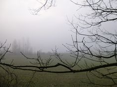 field - winter