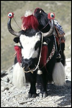 All dressed up in Tibet