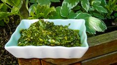 Giersch-Pesto Rezept on http://derbiokoch.de