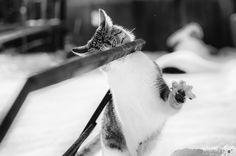 Gatto delle nevi by Tina Casulli