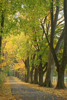 I have this dream to have a tree lined driveway. I'm such a goof. (: