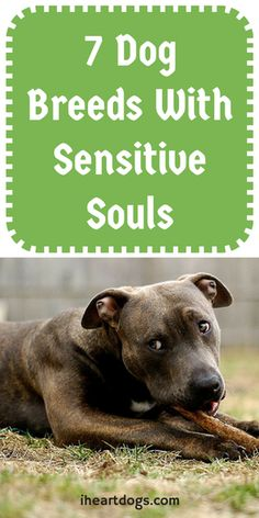 All dogs can be sensitive, but these sweet souls need extra TLC.