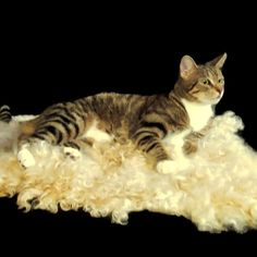 Cat Bed Wool Fleece Cruelty Free Felted Rug - Cotswold and Alpaca- Supporting US Small Farms