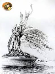 Image result for pemphis bonsai