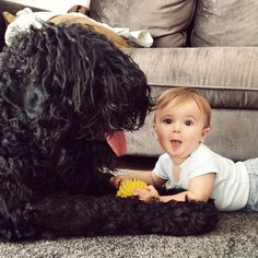 Kron & Arie playing together Black russian terrier & baby boy Black Russian Terrier, Terrier Dog Breeds, Maine Coon Cats, Beautiful Dogs, Dog Art, Best Dogs, Pup, Baby Boy, Animals