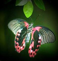 "WOW Butterflies, like all flowers, animals and plants have names!  Not enough to say, ""pretty"", or ""wow"""