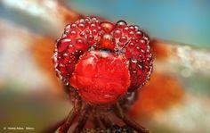 Red by Ondrej Pakan, via 500px