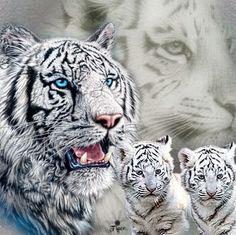 white tiger - Google Search                                                                                                                                                                                 More