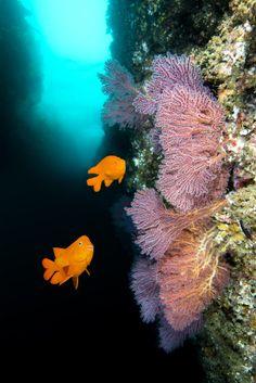 Catalina Island in #California Snorkeling