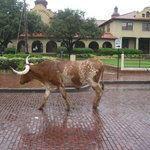 H3 Ranch, Fort Worth - Restaurant Reviews - TripAdvisor