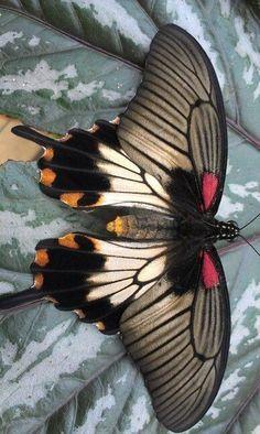 Beautiful! ✏✏✏✏✏✏✏✏✏✏✏✏✏✏✏✏ IDEE CADEAU ☞ http://gabyfeeriefr.tumblr.com/archive ..................................................... CUTE GIFT IDEA ☞ http://frenchvintagejewelryen.tumblr.com/archive ✏✏✏✏✏✏✏✏✏✏✏✏✏✏✏✏