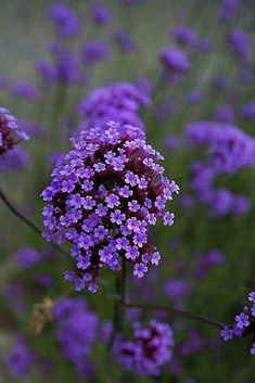 Purple flowers are a great way to add interest to your yard or landscape. See some of our favorite purple garden flowers! flowers flowers names wedding flowers