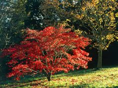 Trees and Shrubs That Give You Bright Fall Color --> http://www.hgtvgardens.com/garden-types/ideas-for-fall-beds-and-borders?soc=pinterest