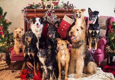 Christmas Doggies Christmas Animals, Christmas Pets, Family Christmas, Christmas 2016, Christmas Time, Merry Christmas, Holiday, Dog Photos, Funny Photos