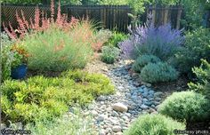 drought tolerant plants and dry creek bed - Google Search
