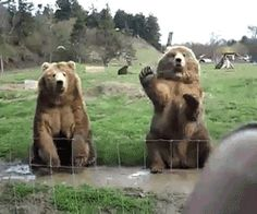 "Bears are so friendly! What he's really saying is, ""Keep waving Frank! Distract them to come closer and I'll swat one."""