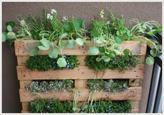 vertical gardening with pallet