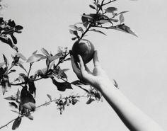 Mustafa Hulusi, Apple Hand, screenprint on steel, 2004